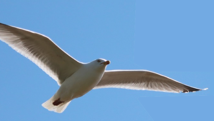 Voglio Volare: 3 livelli di approfondimento per essere sempre più liberi di scegliere e agire.